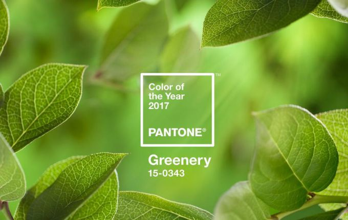 Colour of the Year 2017 colour of the year 2017 Unveiling the Pantone Colour of the Year 2017: Greenery PANTONE Color of the Year 2017 Greenery 15 0343 leaves 2732x2048 1200x900