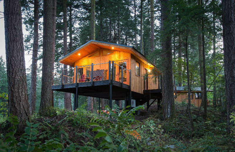 eco-friendly luxury treehouses Take A Look At These 7 Eco-Friendly Luxury Treehouses Around The World feat 3