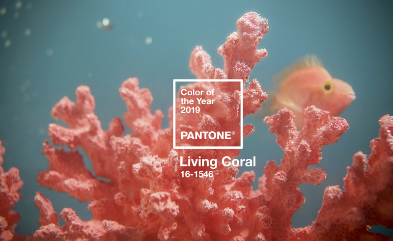 Pantone Just Revealed Living Coral As The Colour of The Year 2019 Colour of The Year 2019 Pantone Just Revealed Living Coral As The Colour of The Year 2019 Pantone Announces Living Coral As The Colour of The Year 2019 1